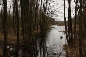 abfluss nordufer plauer see - eingezäunt und betreten verboten - nur kucken und schön auf dem rechten weg bleiben!