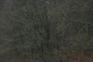 blasser wald
