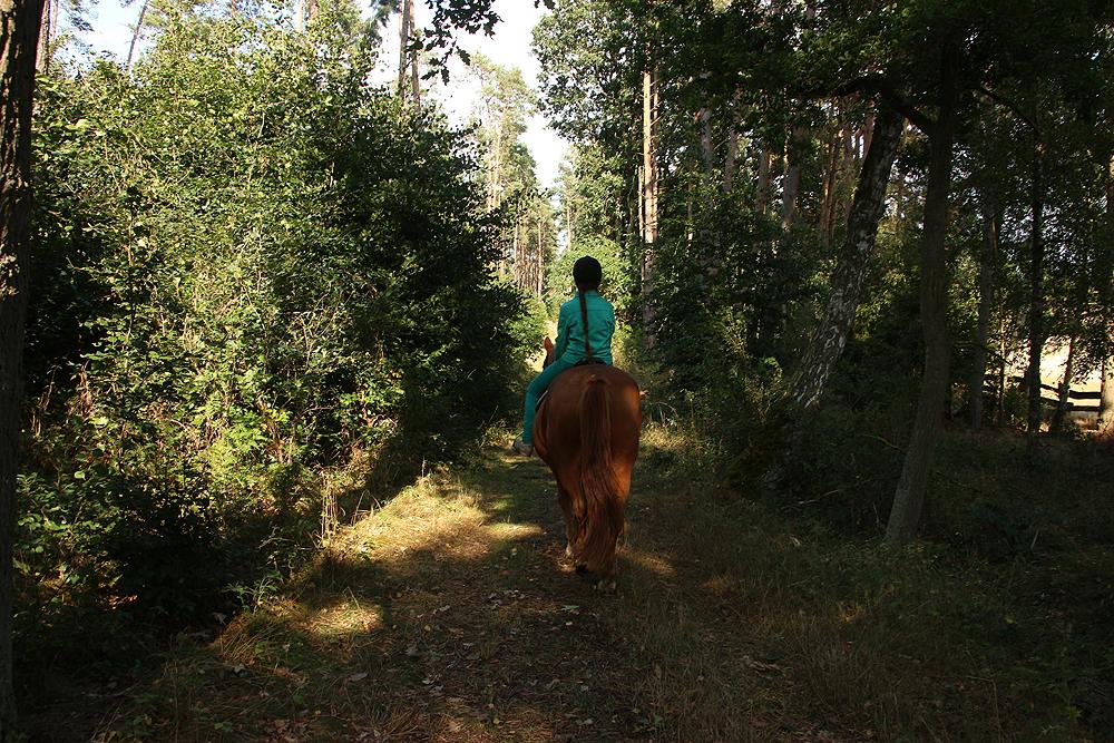 bruchmühle, Bruchmuehle, Pferd, reiten