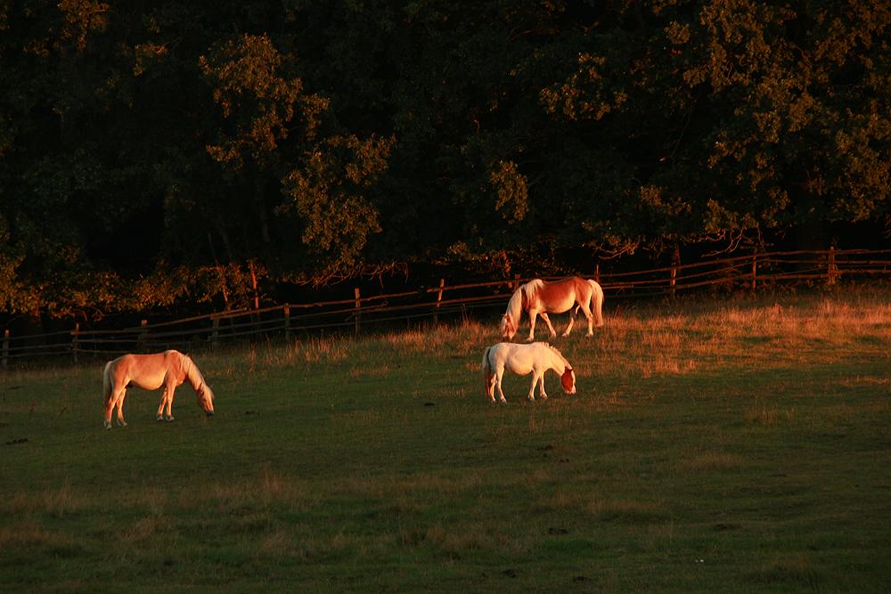 Bruchmühle, Pferd, Morgenlicht