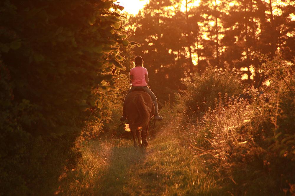 Bruchmühle, Pferd, Reiten, Sonne, Abend