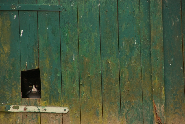 Bruchmühle, Katze