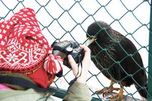 fotovogel