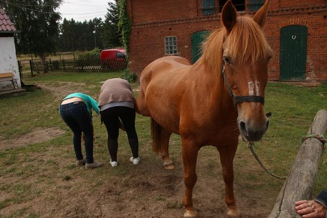 bruchmühle, Bruchmuehle, Pferd, Moritz
