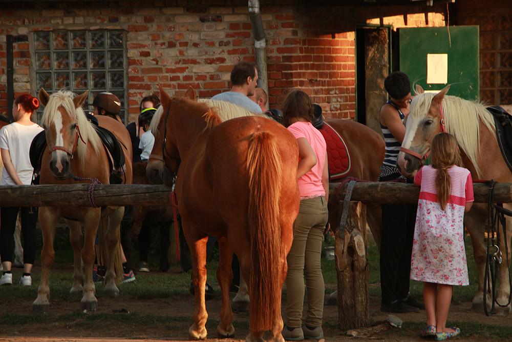 Bruchmühle, Pferde, Ausritt